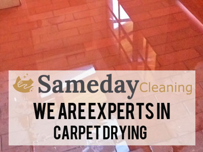 Dry Wet Carpet Cleaning Berkeley