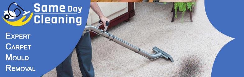 Expert Carpet Mould Removal